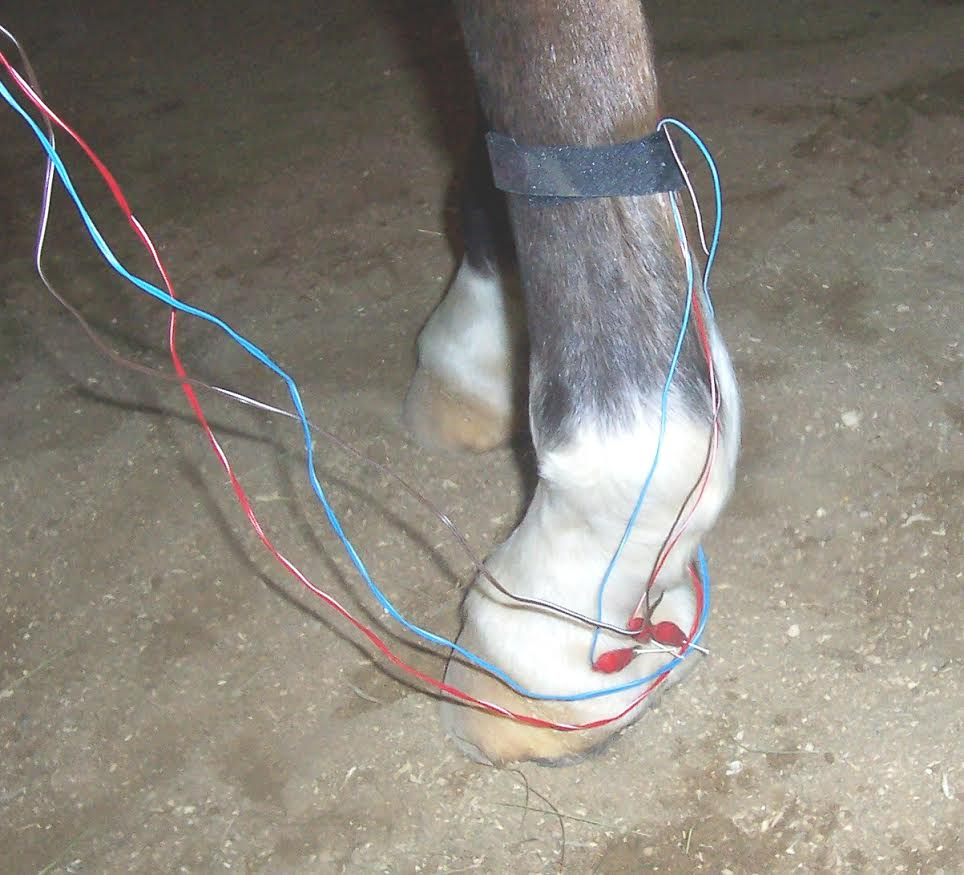 A horses hoof that is receiving acupuncture